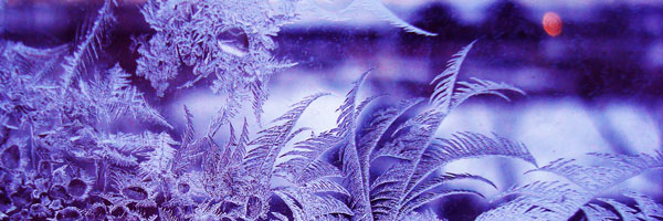 PurpleFrost
